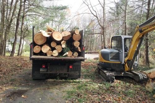 tree work 281129