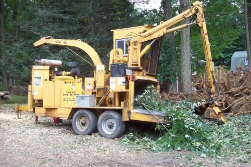 tree work 28329
